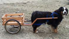 Dog Carts!  Lots of people diy these, and often include seats for children (or even adults).  I like the idea of making a dog a working member of the family, since it ensures lots of exercise and prevents boredom!