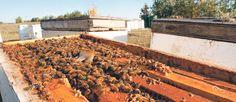 Glyphosate presence in honey raises concerns - The Western Producer