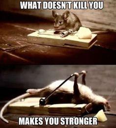 funny-animal-memes-011-008.jpg (620×688)