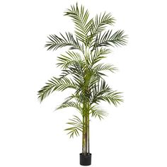 6' Areca Palm Silk Tree >>> You can get more details by clicking on the image.