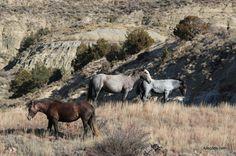 #Wild Horses - 4 Dog Arts