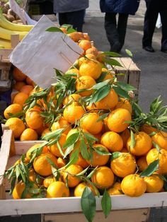 Fresh from the market, Siracusa, Italy