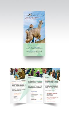 9 best flyer and pamphlet design images on pinterest brochure lamadiation pamphlet design for an animal assisted therapy association in lavigney france solutioingenieria Choice Image