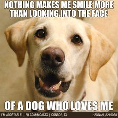 True Story! #dogs #mcaspets