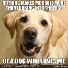 True Story! #dogs #mcaspets
