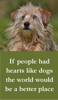 Dog Quotes - If people had hearts like dogs the world would be a better place