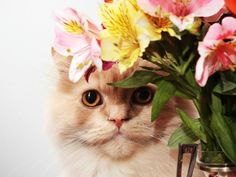 Pet-friendly (and harmful) houseplants.