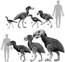 TERROR BIRD - Cerca con Google
