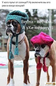 Милые Собаки, Собаки И Щенки, Забавные Собаки Породы Боксер, Собачки, Обезьяны, Самые Симпатичные Собаки, Котопес, Милые Щенки