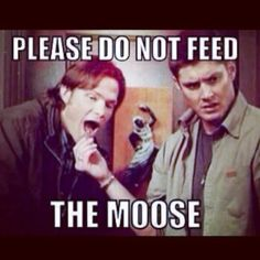 What ever you do, Don't Feed the Moose!<-- Too late, they fed me