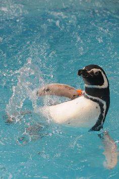 Penguin;) STOP using clorox & chemicals that go into the water then you eat the fish for dinner!
