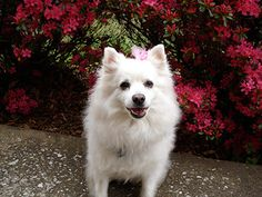 Spring Safety Tips for Your Dog