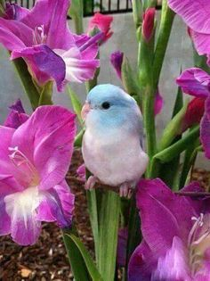 beautiful birds, butterflies and flowers - Community - Google+