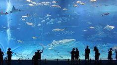 Kuroshio Sea   2nd largest aquarium tank in the world   song is Please d...