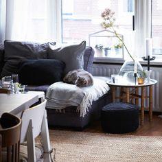 Blick auf ein einfarbig eingerichtetes Wohnzimmer. Auf dem anthrazitfarbenen Sofa schläft die Katze der Familie.