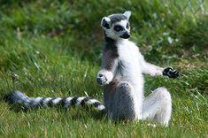 25 animaux qui vont vous apprendre à faire du yoga !
