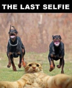 38 Hilarious Memes Guaranteed To Make You Laugh and You Lose It. but laughter is the best medicine. And if you need more of that laughter Funny Animal Memes, Funny Animal Pictures, Funny Photos, Funny Dogs, Funny Animals, Cute Animals, Funny Memes, Funny Fails, Cat Memes