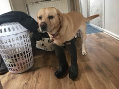 Boot too big for he got damn feet http://ift.tt/2tMIvam