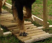DEGILITY - Hundephysio-Winsen