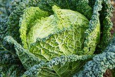 Cultivo de la berza - http://www.jardineriaon.com/cultivo-de-la-berza.html #plantas