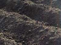 GrowGuide all about soil types from GrowVeg.com Soil type can determine which vegetables grow best for you. Knowing your soil type enables you to overcome problems since you can prepare the ground accordingly. Both the texture and pH of the soil are worth knowing and these can vary throughout your garden or plot.