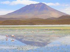 The Culture Report: Kickstarter Stumbles, Biodynamic Wine, Sleep on Bolivia's Salt Flats
