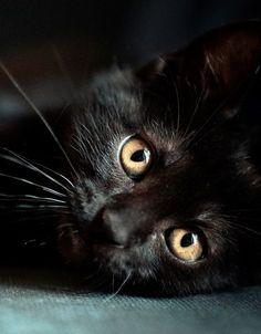 Little sweetheart - Black Cat