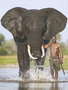 Ohh what a lucky guy- and what a majestic elephant!!