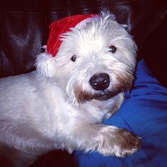 My Boy ready for Xmas! :D