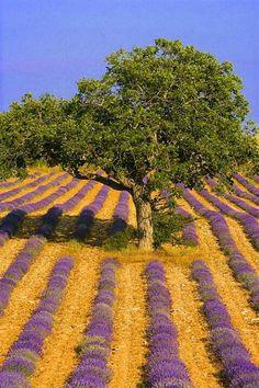 Be always in my fields, I ask and pray = Estar sempre em meus campos, peço em oração.