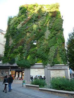 Inauguration de l'oasis d'Aboukir créée par Patrick Blanc (vertical garden) http://www.pariscotejardin.fr/2013/09/inauguration-de-l-oasis-d-aboukir-creee-par-patrick-blanc/