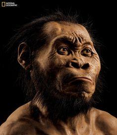 Het gezicht van Homo naledi (MARK THIESSEN/NATIONAL GEOGRAPHIC)  Wetenschappers hebben een nieuwe voorouder van de moderne mens gevonden in een grot in Zuid-Afrika. De Homo naledi had een klein brein en aapachtige schouders, maar leek verder veel op de mens