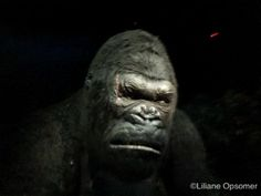 King Kong is Back and Skull Island is His Home | http://www.themouseforless.com/blog_world/2016/07/king-kong-is-back-and-skull-island-is-his-home/