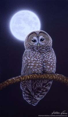 Moonnight Owl, stunning acrylic painting on canvas by The Art of Kentaro Nishino Owl Photos, Owl Pictures, Owl Wallpaper Iphone, Animal Wallpaper, Bird Artwork, Beautiful Owl, Animal Totems, Snowy Owl, Owl Art