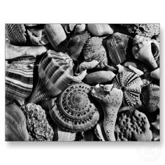 black and white shells, Bathroom Art, black and white