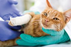 Natural Anesthetics for Dogs and Cats