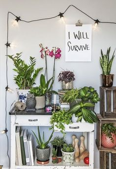 More ideas below: Plant Decor, Retro Interior, Decor, Green Rooms, Plant Table, Living Room Plants, Floral Decor, Plant Book, Easy Care Plants