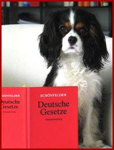 Hund im Büro tierrecht anwalt hund http://www.tierrecht-anwalt.de hundebiss hundeattacke EMMA