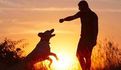 Silent Dog Whistle Training Tips http://thesmokeydog.com/silent-dog-whistle-training-a-few-tips/