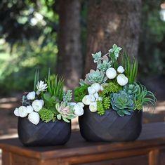 Sukulenty sztuczne, gumowe, jak żywe. Nylon Flowers, Plants, Decorations, Fall Winter, Creative, Planters, Plant, Planting