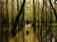 By Zack Rizzo One of the United States newest entrants to national park status is South Carolina's Congaree National Park. This...