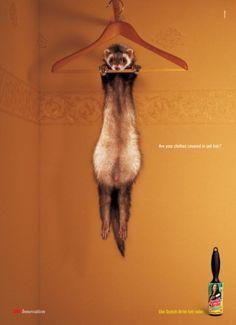 ferret #ferretdaily