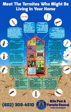 Meet The Termites Who Might be Living In Your Home [Infographic] | Bills Pest Termite Control