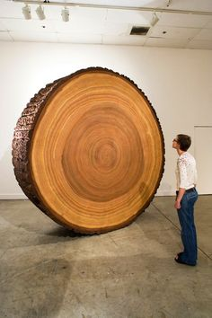 """Sharon Levy's installation entitled """"The Wood"""" is a group of sculptures that examine trees in a series of different ways. The most striking piece when one enters the room is the massive nine-foot-tall """"cookie"""" or cross-section of a tree. Meticulously painted, this work only resembles an actual tree ring, it's actually made of stretched and painted canvas with carved and painted foam rubber serving as the tree bark."""