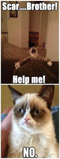 Lion king vs grumpy cat cat and dog memes funny cats and dogs cute Cute Animal Memes, Animal Jokes, Cute Funny Animals, Funny Animal Pictures, Grumpy Cat Quotes, Funny Grumpy Cat Memes, Funny Memes, Funny Quotes, Funniest Quotes