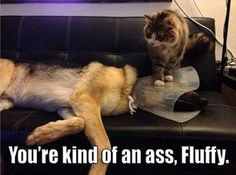 And you thought the cone of shame couldn't get any worse...
