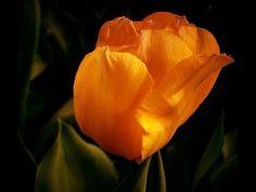 Orange 28.pps