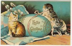 Cats, Easter, Three Cats with a Huge Easter Egg, old embossed postcard 1909 Easter Cats, Happy Easter, Vintage Cat, Vintage Easter, Holiday Postcards, Vintage Postcards, Vintage Images, Vintage Ephemera, Easter Parade