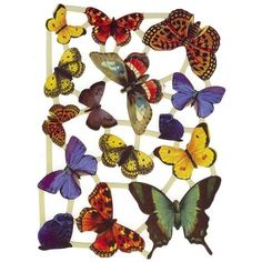 Colorful Butterfly Scraps ~ Holland