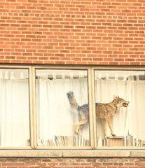 Window Art by Evonne Bellefleur